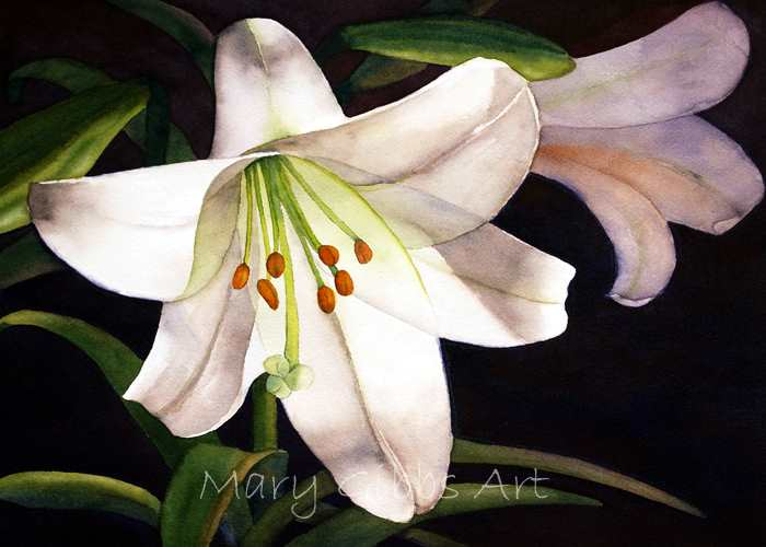 How to Paint Easter Lilies in Watercolor